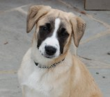 Jingle was adopted in April 2013 after one month.
