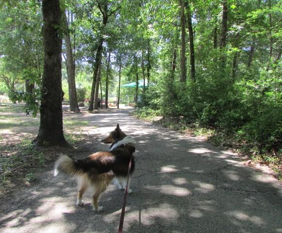 Shaded walking trails