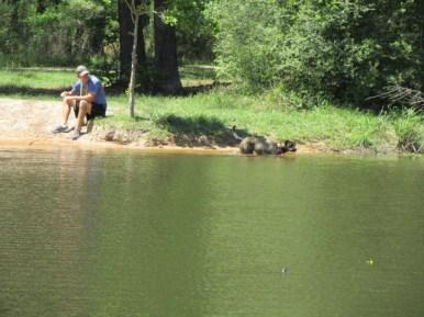 Dog enjoying a dip in Meadow Pond