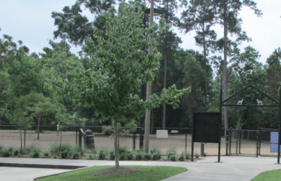 View of the large dog park