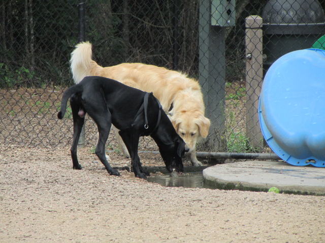 Zeus and friend playing in water area