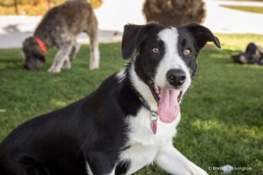 Mission park dog 2