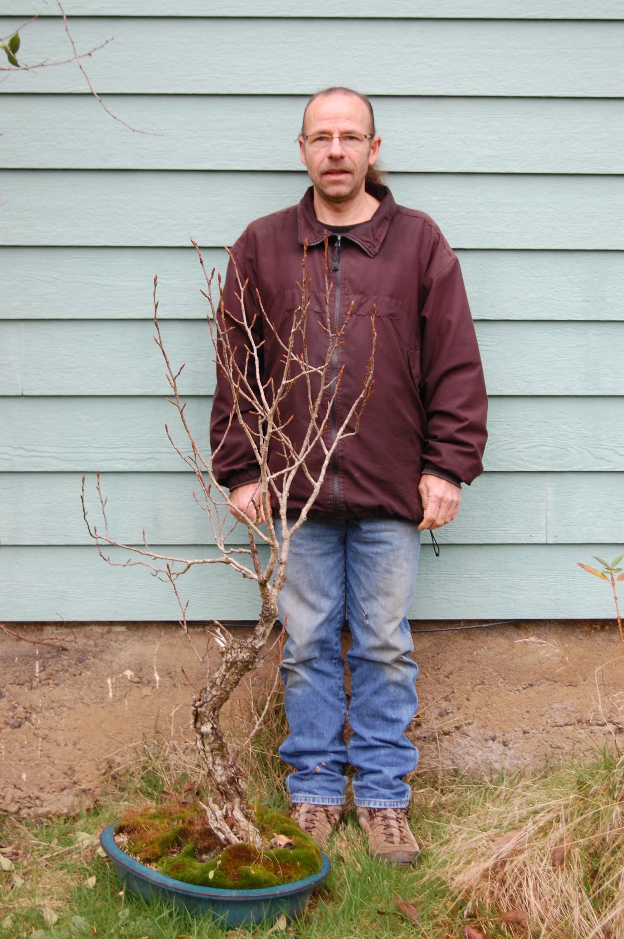 Cottonwood Bonsai : cottonwood, bonsai, Collected, Cottonwood, Bonsai, Brendenstudio