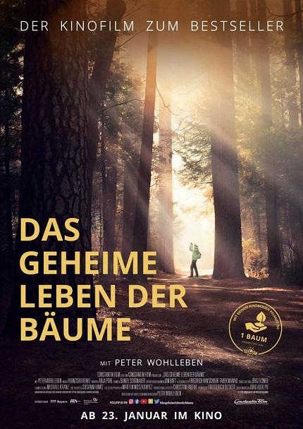 Brennessel Kino