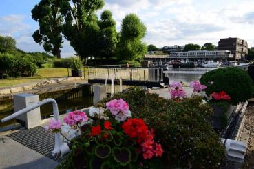 Brentford Dock Flowers by Lock