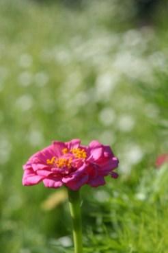 Ashley's Flower Garden