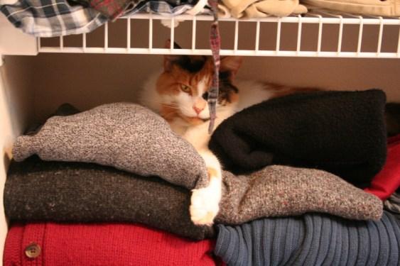 Nemo relaxing in the closet
