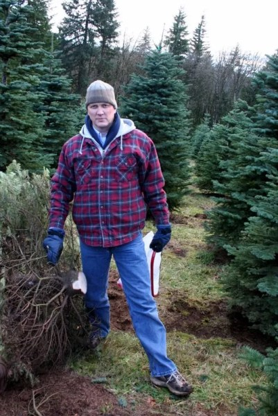 Serious Business - Felling a Christmas tree is serious business. *