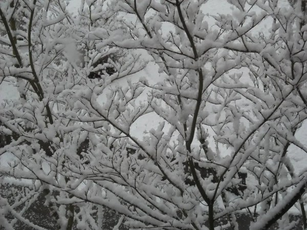 Snow on branches at work