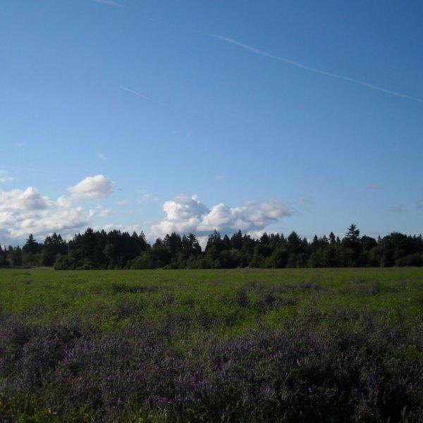 Hillsboro Field