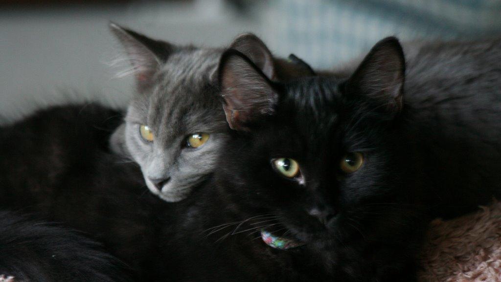 Meet Hazel and Ginger