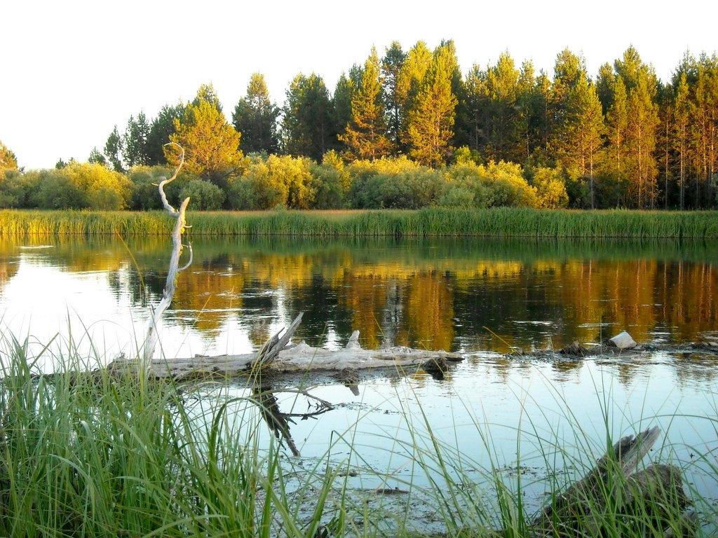 River snag