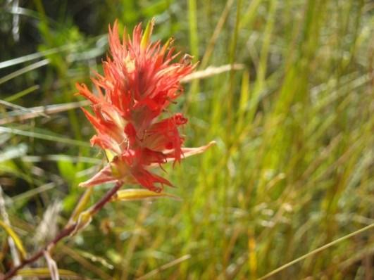 A wildflower for Suzi