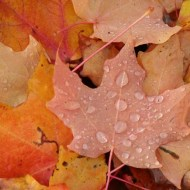 Hydrophobic leaf bottom