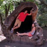 Hollow log in Leggett
