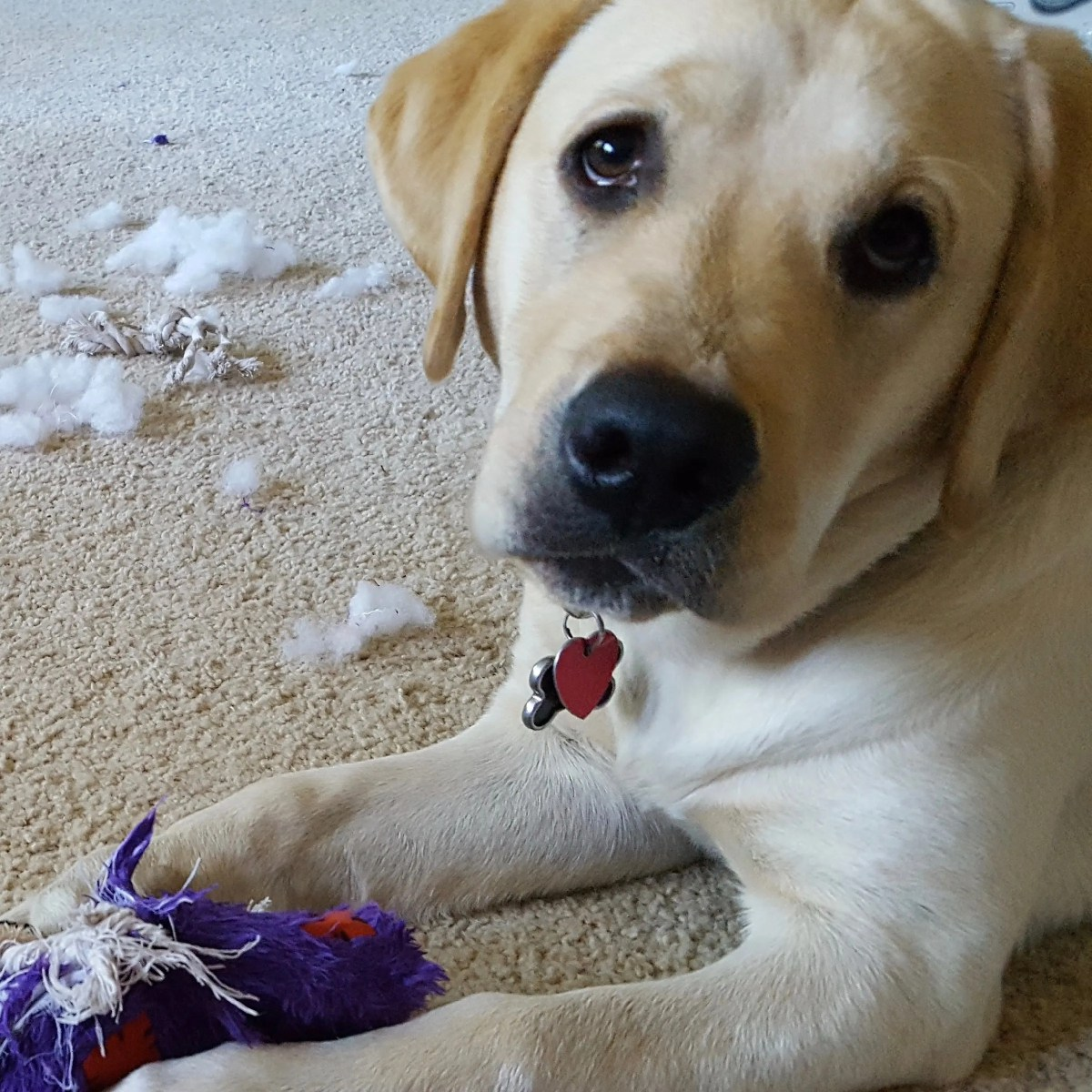Gilly and her new toy (and its remains)