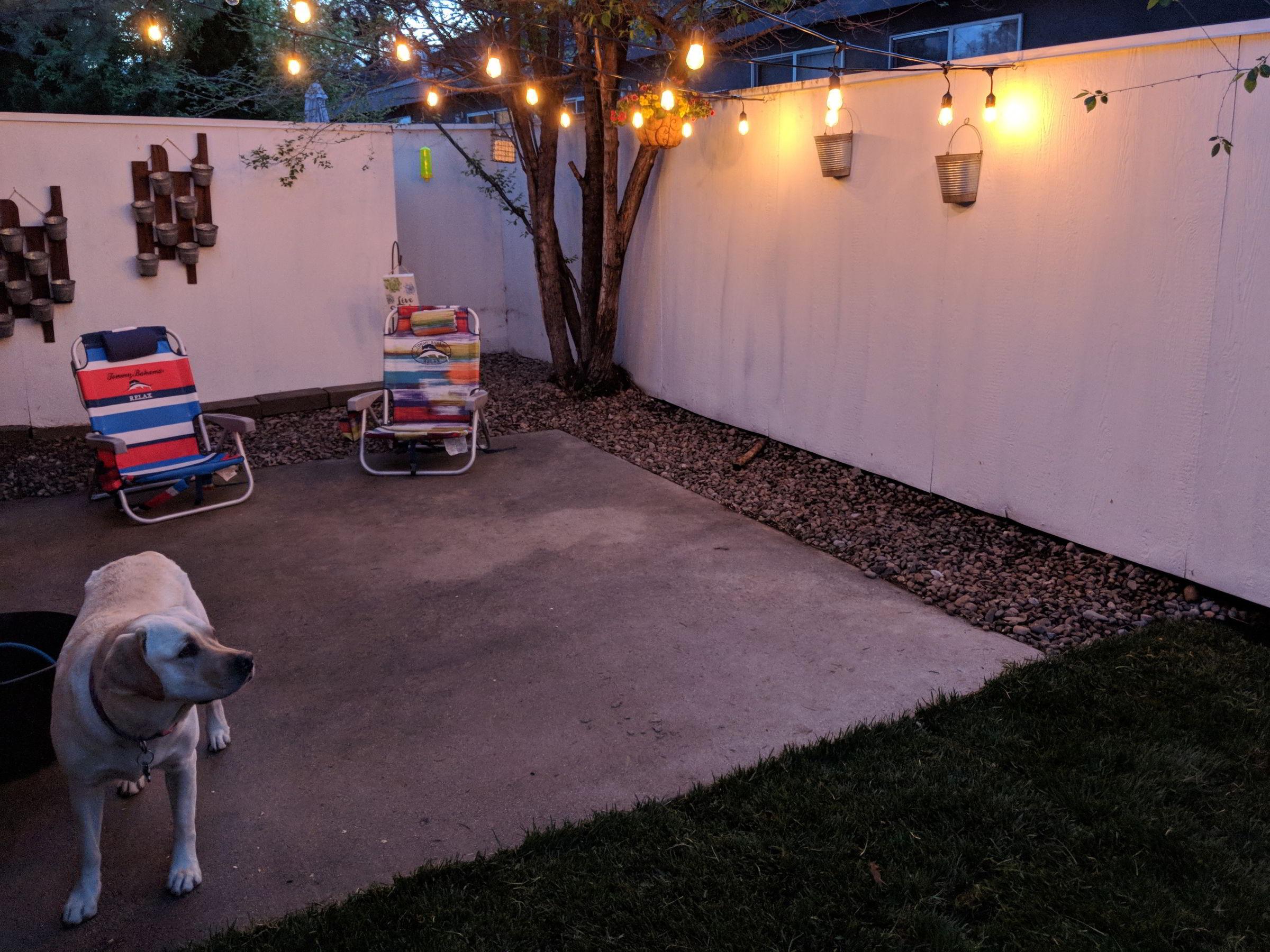 SLC backyard -- Gilly approves
