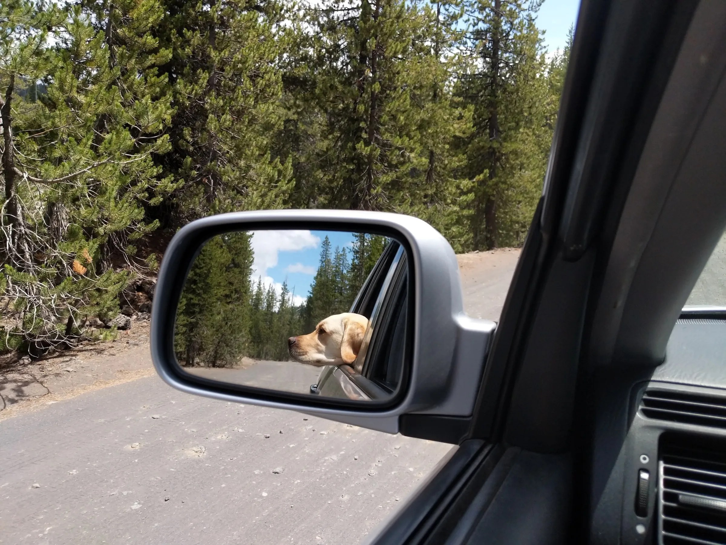 Gilligan sniffing the air. We must be getting close to Sparks Lake.
