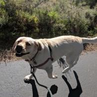 Did I say Gilligan loves her morning walks?