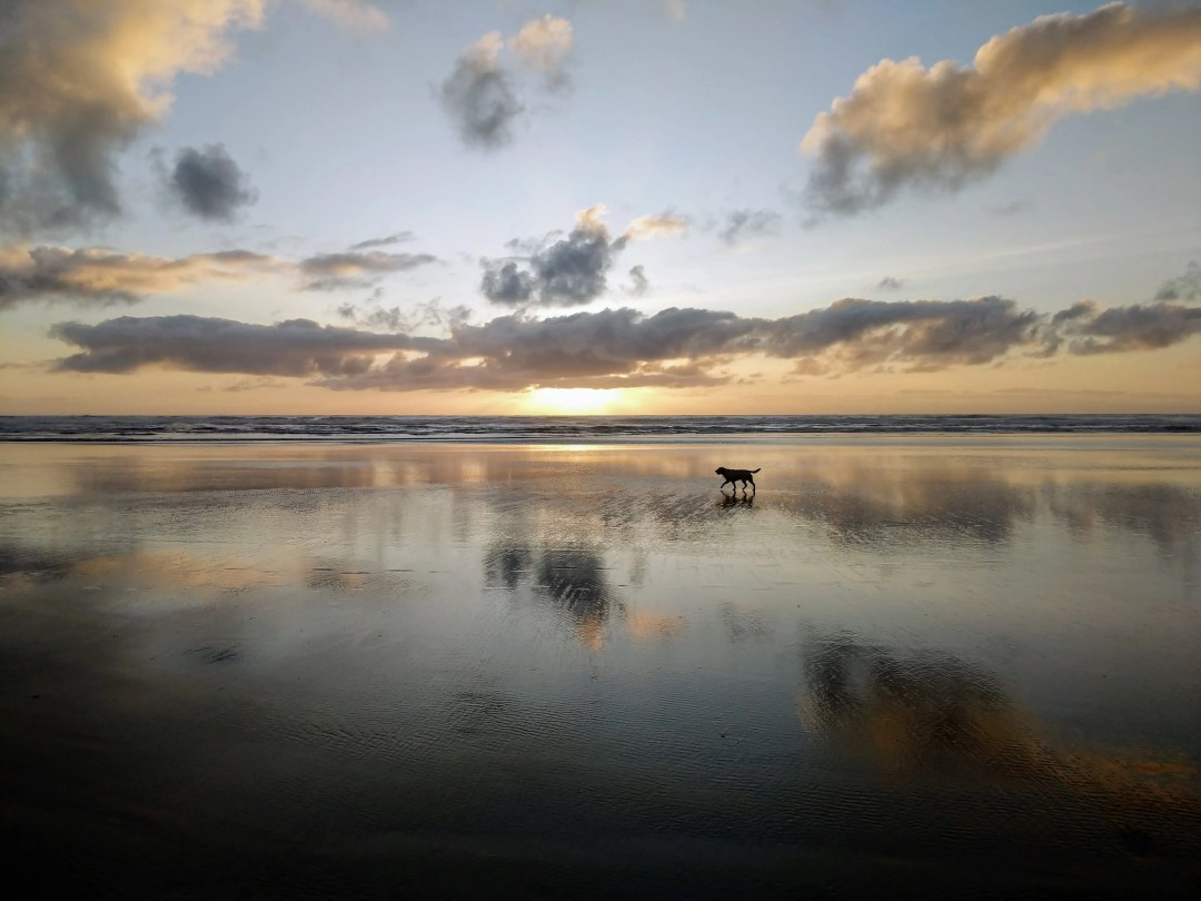 Gilligan explores Cannon Beach