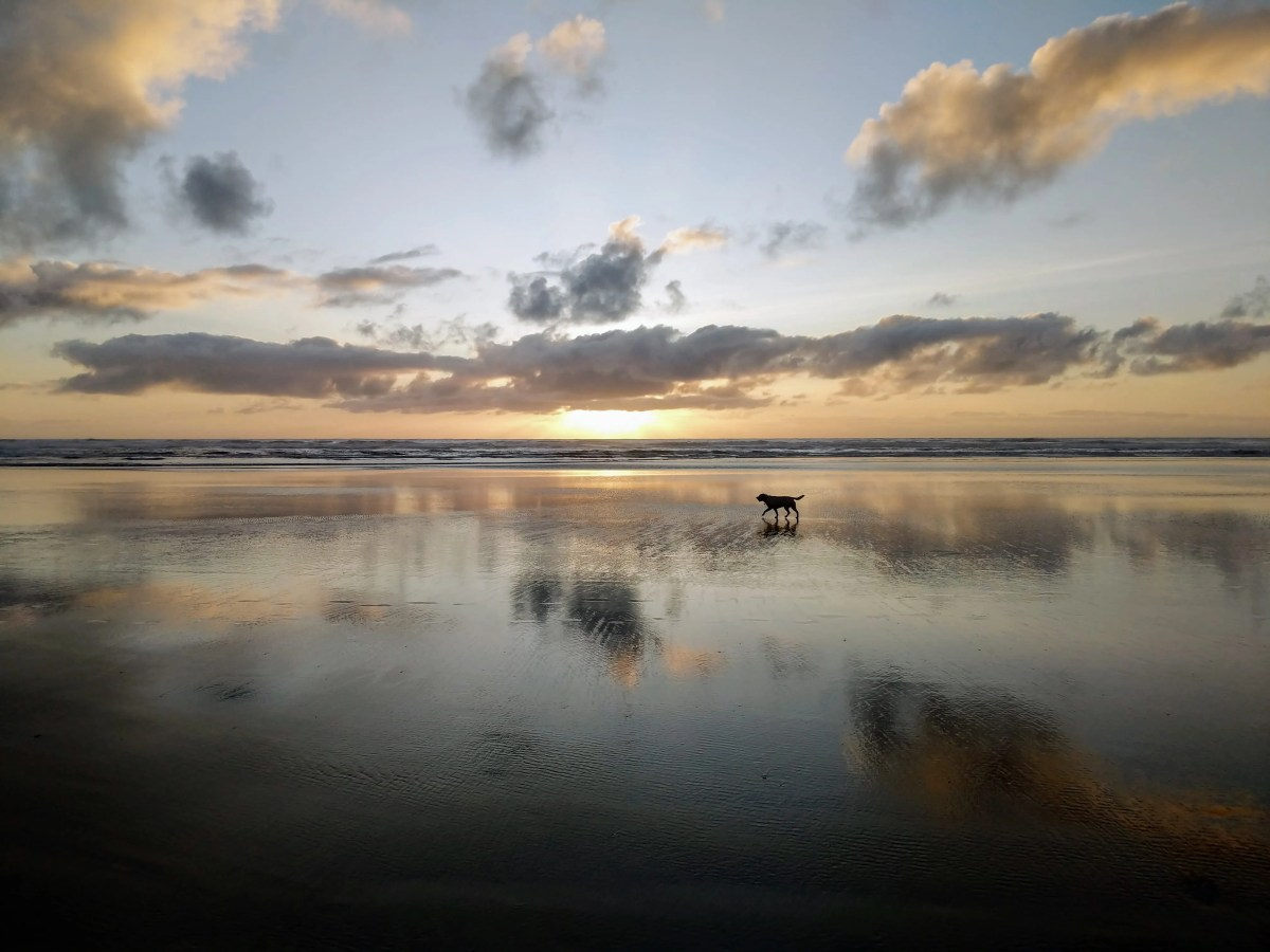Gilligan explores Cannon Beach