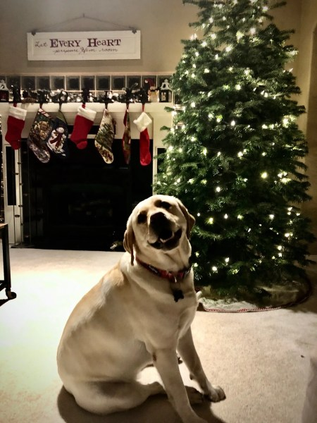 Gilligan approves of the tree
