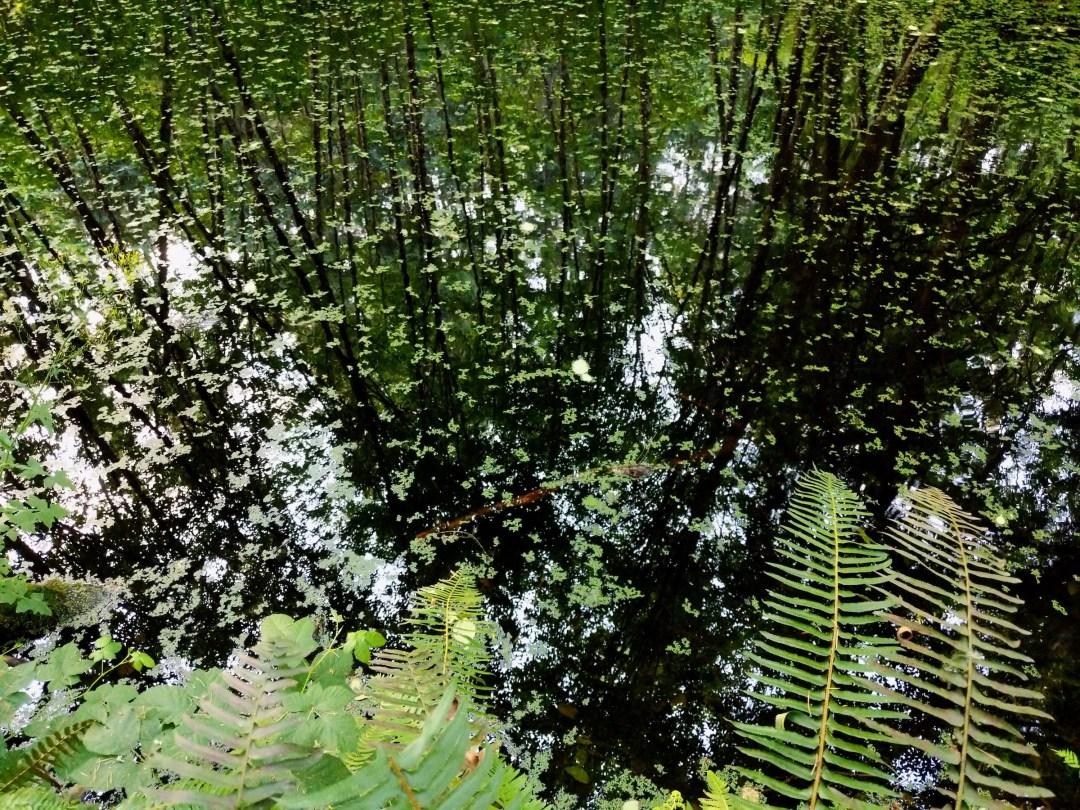 Pond at Buxton trailhead