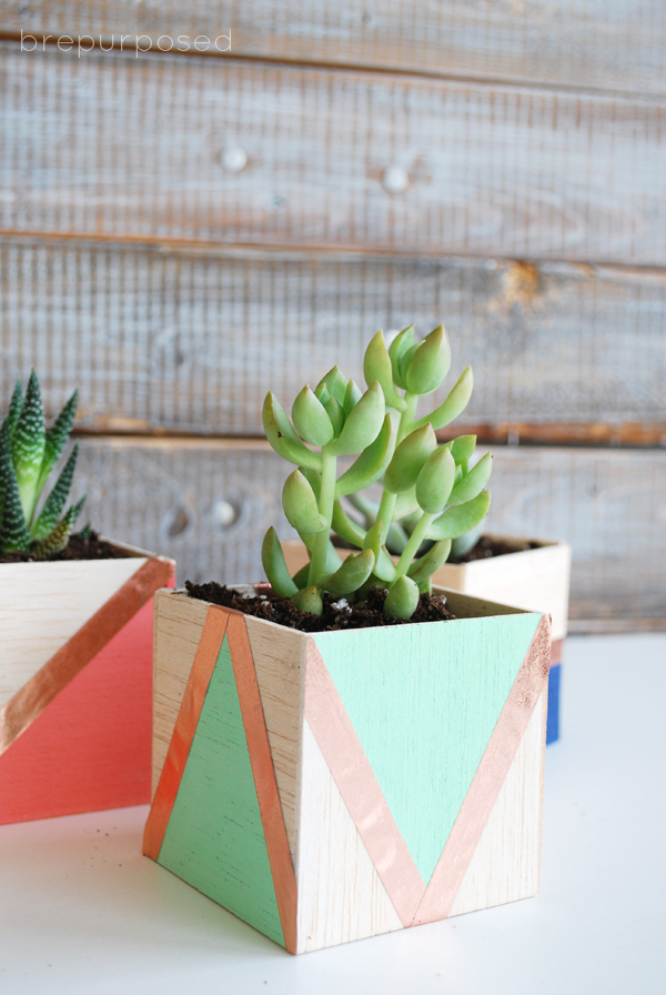 How to make diy balsa wood planters for succulents