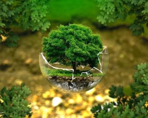Ecologia e ambiente, foto generica da Pixabay