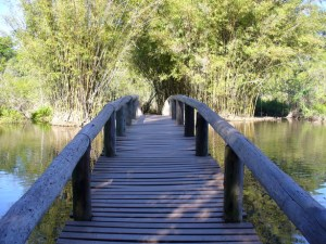 bridge-to-forest-1379009