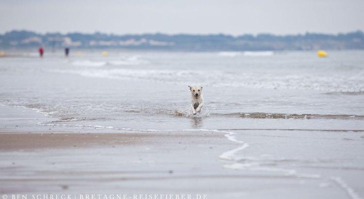 Urlaub-mit-Hund-am-Meer-Bretagne