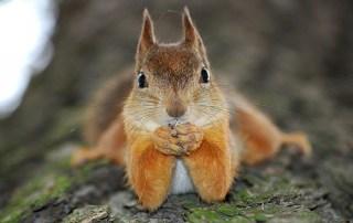 Squirrel distraction