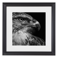 Wolf Ademeit Animal Black and White Fine Art Photography Portrait Zoo Animals Photographer Fine art photography for sale, Brett Gallery, art for home, corporate art, large format photography, Wildlife photography Eagle