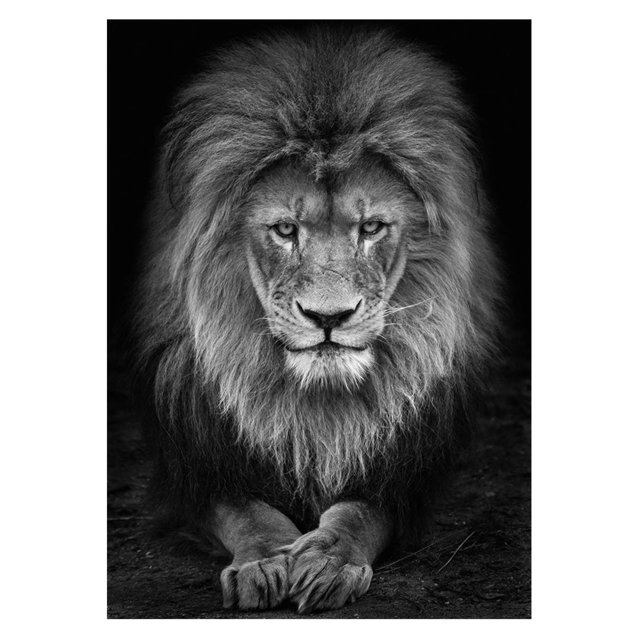 Wolf ademeit animal black and white fine art photography portrait zoo animals photographer fine art photography