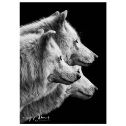 Wolf Ademeit Animal Black and White Fine Art Photography Portrait Zoo Animals Photographer Fine art photography for sale, Brett Gallery, art for home, corporate art, large format photography, Wildlife photography Wolf