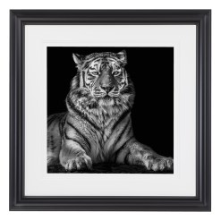 Wolf Ademeit Animal Black and White Fine Art Photography Portrait Zoo Animals Photographer Fine art photography for sale, Brett Gallery, art for home, corporate art, large format photography, Wildlife photography Tiger