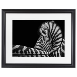 Wolf Ademeit Animal Black and White Fine Art Photography Portrait Zoo Animals Photographer Fine art photography for sale, Brett Gallery, art for home, corporate art, large format photography, Wildlife photography Zebra