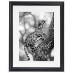 Ross Couper Animal Black and White Fine Art Photography, Wildlife Photographer, Fine art photography for Sale, Brett Gallery, Art for Home, Corporate Art, Large Format Photography, Wildlife Photography, Art Gallery, Leopard