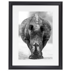 Ross Couper Animal Black and White Fine Art Photography, Wildlife Photographer, Fine art photography for Sale, Brett Gallery, Art for Home, Corporate Art, Large Format Photography, Wildlife Photography, Art Gallery, Rhino