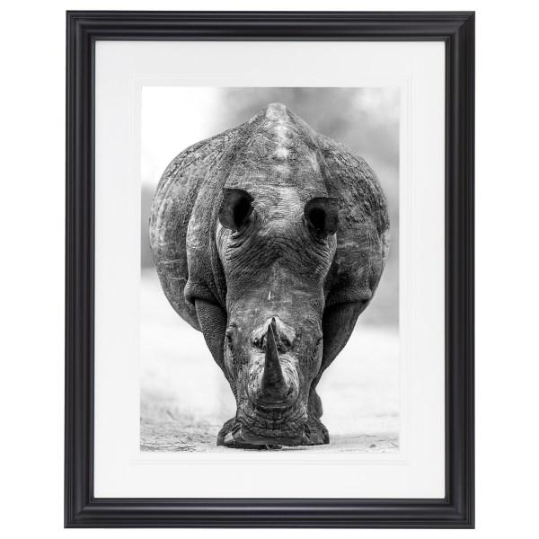 Ross Couper Animal Black and White Fine Art Photography, Wildlife Photographer, Fine art photography for Sale, Brett Gallery, Art for Home, Corporate Art, Large Format Photography, Wildlife Photography, Art Gallery, Rhino