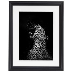 Ross Couper Animal Black and White Fine Art Photography, Wildlife Photographer, Fine art photography for Sale, Brett Gallery, Art for Home, Corporate Art, Large Format Photography, Wildlife Photography, Art Gallery, Leopard