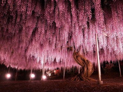 8 Most Wondrous Trees from Around the World