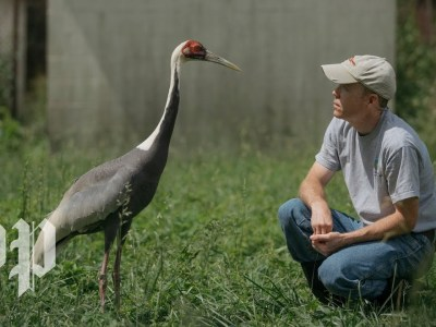 The Crane that Fell in Love with a Human