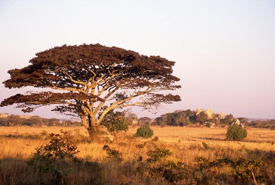 Zimbabwe058