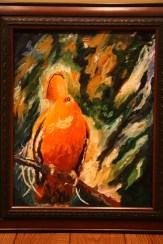 Guianan Cock-of-the-Rock, Suirname 2004