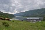 Sobald das Tal etwas weiter wurde, drängten sich kleine Höfe an die Hänge.