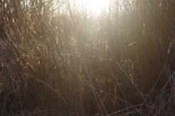 Im Naturschutzgebiet.