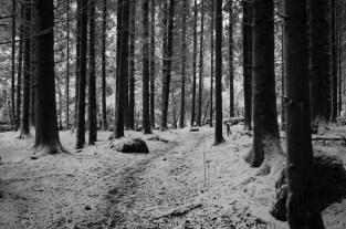 Gespenstische Stimmung im Wald.