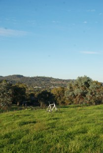 A Crockett in the wild, and I have never seen Canberra so green