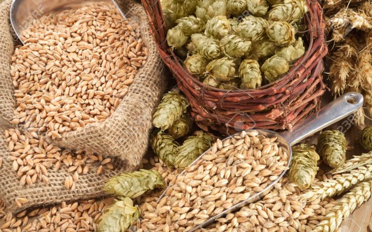 ingredients for home made beer hops and grains